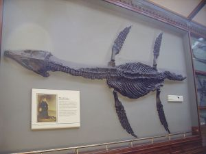 800px-Rhomaleosaurus_&_Mary_Anning_plaque_NHM